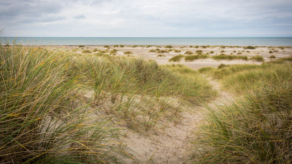 Increasing attention is being given to nature-based solutions as coastal protection schemes