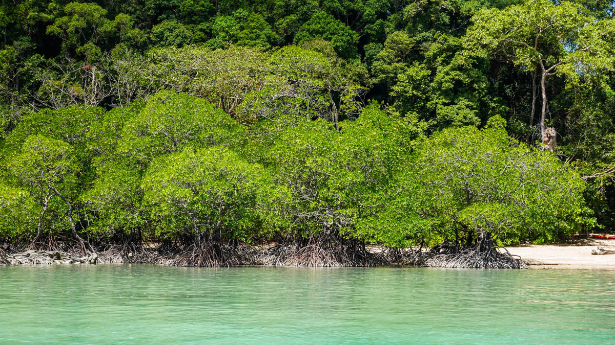 Coastal mangrove forests protect coastal communities from waves, storm surge, and coastal erosion