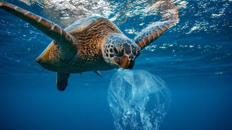 Battling marine plastics