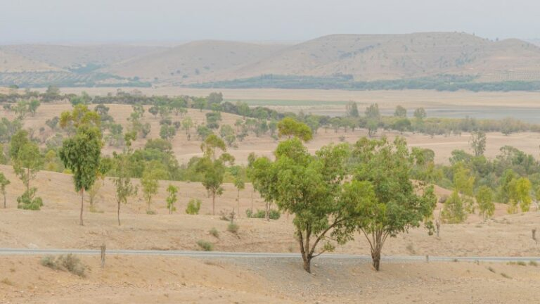 1.8 billion trees found in the Sahara due to Artificial Intelligence