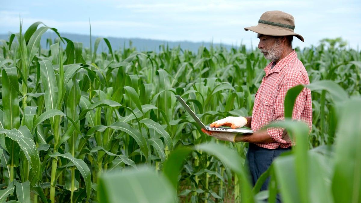 Elderly farmer using digital tablet