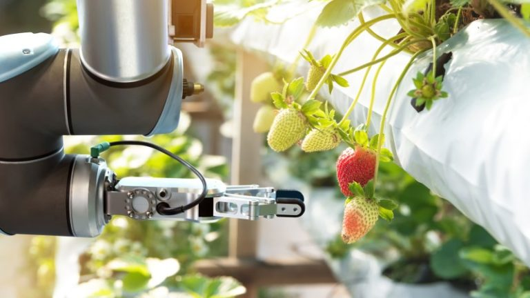 Flying robot uses Artificial Intelligence to pick ripe fruit