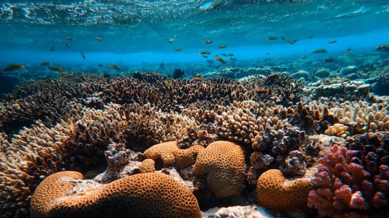 Protecting the ocean is key to fighting climate change