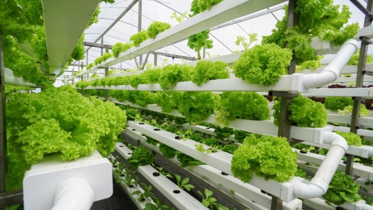 5 sustainable farming methods and practices